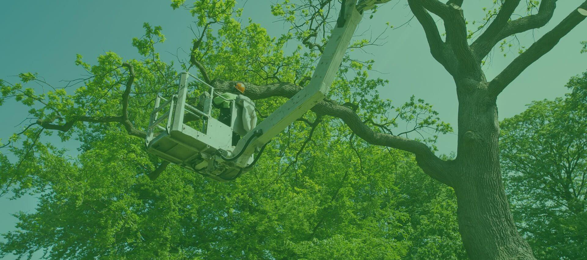 <b>Agroserwis</b><br /> podcinka, wycinka i leczenie drzew